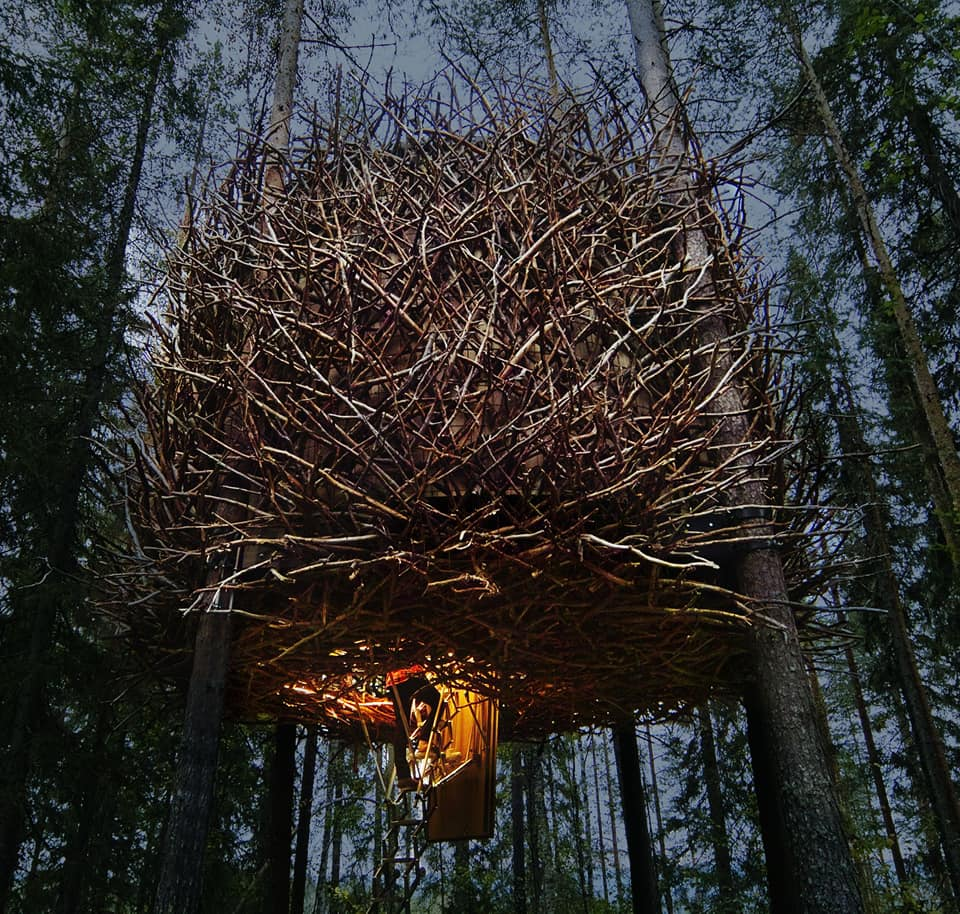 CCTravelHub - The Bird's Nest (Treehotel, Sweden)