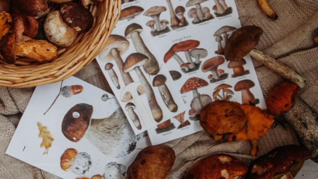 Mushroom Hunting - C&C Travel Hub